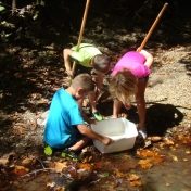 Children looking at their catch during Creek Crawl