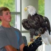 Patriot the bald eagle and his handler