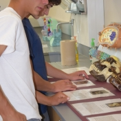 Model Lab students look at skull models