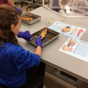 Student gets to try their hand at disecting a squid.